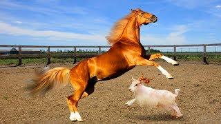 ВЛОГ Кормим лошадей.  Пони парк часть 2. Какие животные живут на ферме
