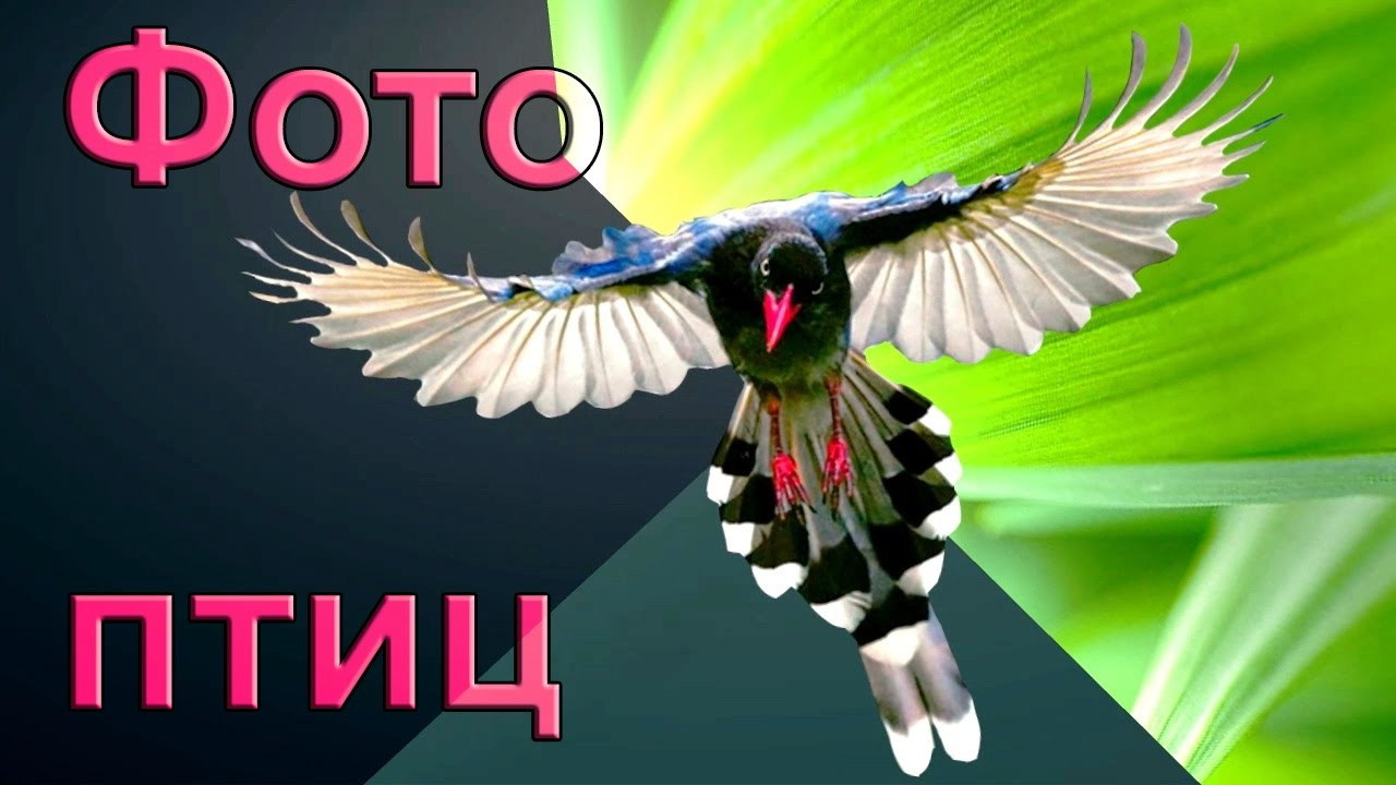 фото птиц и названия птиц