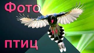 Фото птиц с названиями
