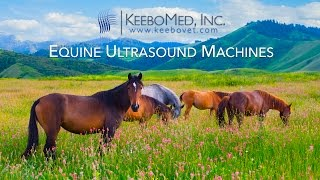Equine Ultrasounds Collection | KeeboVet