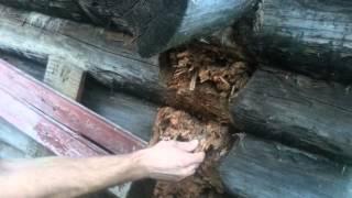видео Как бороться с муравьями в бане и доме