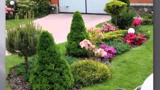 видео Хвойные растения