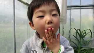 イチゴ狩り食べおさめ, end of strawberry picking season