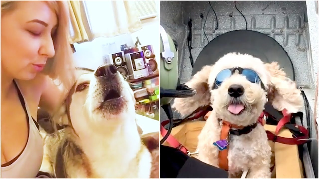 The Ultimate Funny Dog Viral Video Compilation   The Best Pet Videos 2019