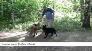 Дрессировка собак, команда апорт, два вида обучения