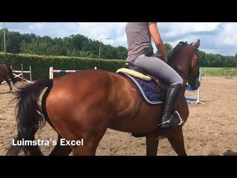 les van Albert Voorn - SH Sporthorses