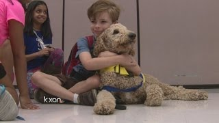 Poodle Combats Autism In Local Elementary School