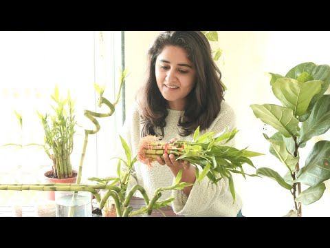 How To Propagate Bamboo: Easy Techniques to Learn