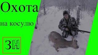Видео Охота на косулю 2017 .Загонная охота.