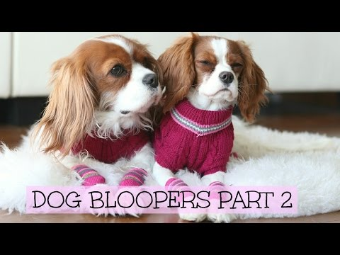 Dog Bloopers | Herky & Milton outtakes Part 2 | Cavalier King Charles Spaniel