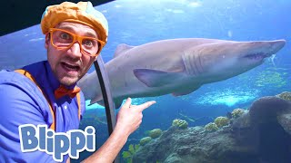 Blippi Visits an Aquarium! | Learn About  Fish & Animals for Kids | Educational Videos For Toddlers