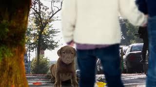 Анимация фото щенка лабрадора