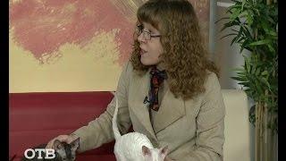 Знакомство с питомцами: кошки  корниш-рекс (29.10.15)