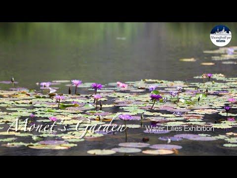 See Claude Monet's Garden 'revive' in Shanghai