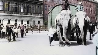 Животные зоопарка на войне