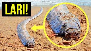 Segera Berlindung jika Kamu Lihat Ikan Ini (dan Tanda-Tanda Peringatan Bencana Alam Lain)