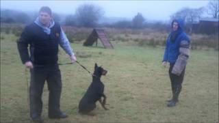 Belfast K9 Working Dog Club 2013-01-05