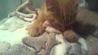 Котёнок скучает по маме