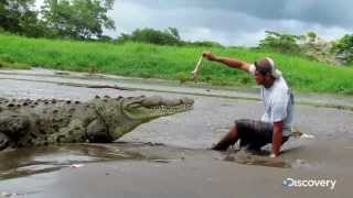 How Not To Feed A Crocodile - You Have Been Warned S2 Ep5