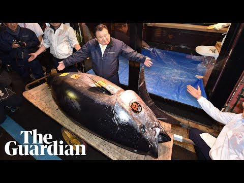 Sushi king pays record $3.1m for endangered bluefin tuna in Japan