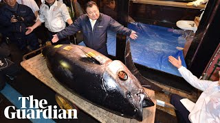 Sushi king pays record price for bluefin tuna