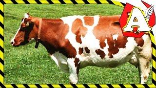 Мультфильм для самых маленьких про животных. Обучающее видео  farm animals. Мультфильмы