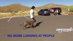 Plot Hound AGGRESSIVE DOG - Dog Training Experts of Phoenix, AZ