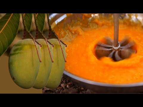 Best Organic Mango Meal at Farm in India   Thali Cooking in an Indian Village Cooking