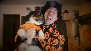 Happy Halloween From David Pumpkins & Chewie The Pumpkin Corgi