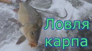 Зимняя ловля карпа. My fishing.