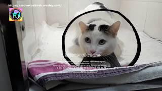 Помощь каждого из вас это надежда на спасение кота с мочекаменной rescue stray cat