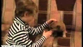 Детские клипы Р. Абдулаев и А. Хадзарагов - Шарик
