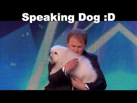 Speaking Dog ♥   Amazing Wildlife720p
