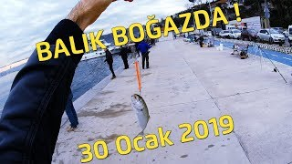 30 Ocak 2019 Balık Boğaza GİRDİ !!!