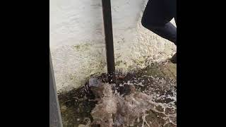 ⚠️ Gutter downpipe blockage 🚫 How to clear??? Call the professionals 🙋♂️ Look at all that water 💧