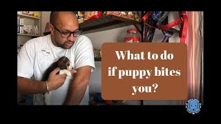 Did you need Anti Rabies vaccination | if Puppy | Dog Bites you or your Family Members? Bhola Shola