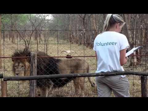 Volunteer at Lilongwe Wildlife Centre