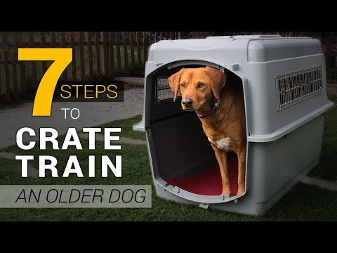 How To Crate Train An Older Dog In 7 Simple Steps
