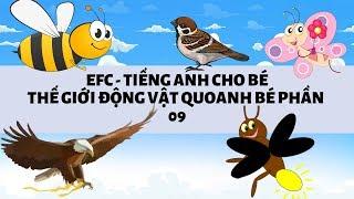 Tiếng anh cho bé - Vừa vui vừa học   Thế giới động vật quanh bé [Phần 9]] EFC