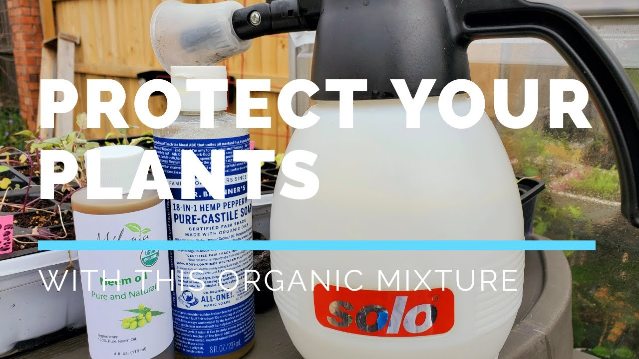 Protect Your Plants With This Organic Mixture
