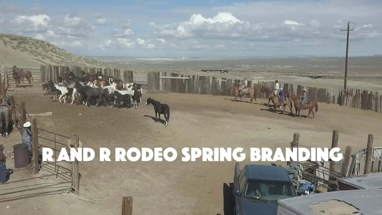 R and R Rodeo Spring Branding