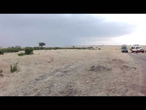 Masai Mara day 1: Lioness surrounded by tourist cars