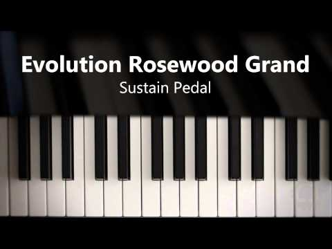 Evolution Rosewood Grand - Sustain Pedal