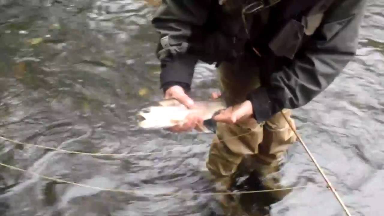 Fly Fishing Bamboo Fly Rod Bambou Refendu Peche Mouche Youtube
