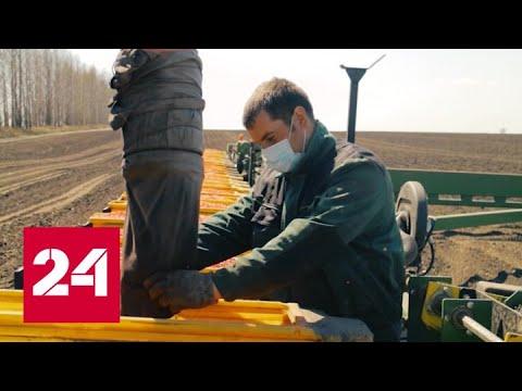 Курская норма. Специальный репортаж Алексея Михалева - Россия 24