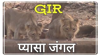 Windmill for lions | Gir forest | Water crises | Summer holidays | Best tourist destinations