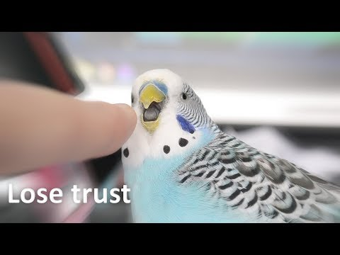 3 Ways to Lose Your Parrot's Trust