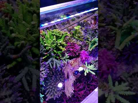 EZ550reef On Led During T5 Bulb Replacement