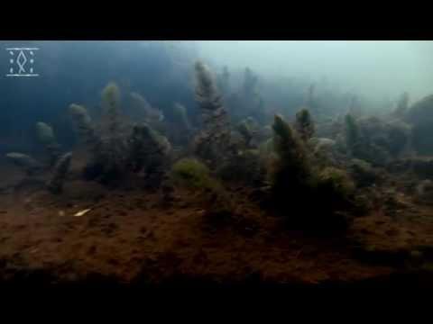 Урень, съемка под водой Много рыбы Relax Edition