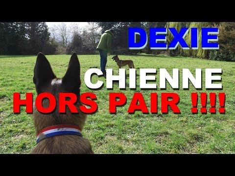 CHIENNE HORS PAIR ! DEXIE